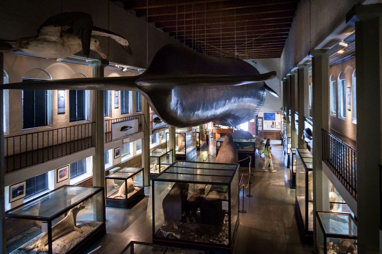 Hvalfangstmuseet-i-Sandefjord